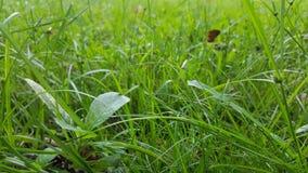 För gräsmattadetalj för grönt gräs slut upp Arkivbilder