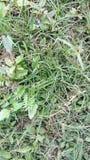 För grönskadjurliv för grönt gräs gräsmatta Arkivbild