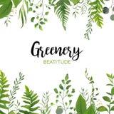 För grönskakort för vektor blom- design: Skogormbunkeormbunksblad, Eucalyptu royaltyfri illustrationer