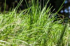 För grönt gräs för detaljer upp Arkivbild