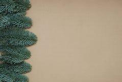 För granträd för jul eller för nytt år bakgrund isoalted sidofilialer på beige neutral bakgrund med kopieringsutrymme Top beskåda Royaltyfria Foton