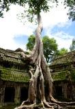 För gravvalvryttare för Ta Prohm tempel Angkor Arkivfoto