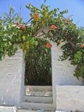 för greece för ingång trädgårds- by hus Royaltyfri Bild