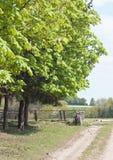 för green trä långt Arkivbild
