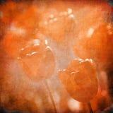 för grungeavstånd för bakgrund blom- text vektor illustrationer