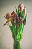 För grupptulpan för tappning stil bleknade blommor Fotografering för Bildbyråer