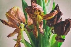 För grupptulpan för tappning stil bleknade blommor Royaltyfria Foton