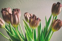 För grupptulpan för tappning stil bleknade blommor Arkivbild