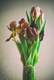 För grupptulpan för tappning stil bleknade blommor Royaltyfri Foto