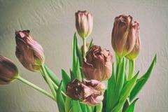 För grupptulpan för tappning stil bleknade blommor Arkivbilder