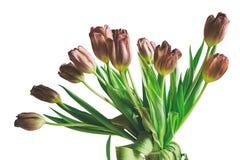 För grupptulpan för tappning stil isolerade bleknade blommor Arkivfoto