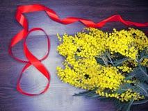 För gul kort för marsch för bakgrund buskevår för mimosa blom- 8 Arkivbilder