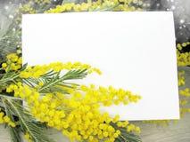 För gul kort för marsch för bakgrund buskevår för mimosa blom- 8 Royaltyfri Fotografi