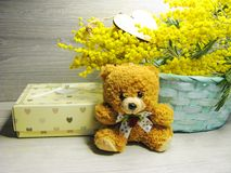 För gul kort för marsch för bakgrund buskevår för mimosa blom- 8 Royaltyfri Bild