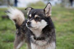 För gullig grunt djup hundgata för stående av fältet Royaltyfria Bilder