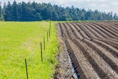 För gyttjajord för jordbruk brunt fält i en vattenflod Royaltyfri Bild