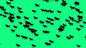 för häståsnor för grupp 4k körning för flyttning för kontur djur, Afrika grässlättnatur royaltyfri illustrationer