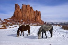 för hästberg för foraging betande vinter Arkivbilder