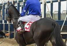 För hästkapplöpning Royaltyfria Bilder