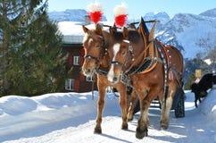 för hästpar för braunwald berömd schweizare för skidåkning för semesterort Royaltyfria Foton