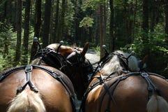 för hästpar för braunwald berömd schweizare för skidåkning för semesterort Arkivfoto