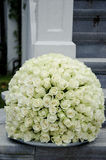 För höjdpunktblomma för vita rosor boll Royaltyfri Fotografi
