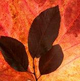 för höstbakgrundsfall för leaves white fortfarande Arkivfoto
