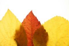 för höstbakgrundsfall för leaves white fortfarande arkivfoton