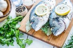 För havsbraxen för ny fisk dorada royaltyfria bilder
