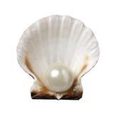 för havsskal för ferie pärlemorfärg lopp Royaltyfria Bilder