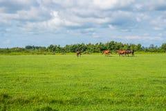 för hdrhästen för lantgårdar betar den gröna bilden Landsvårlandskap georgia Royaltyfri Bild