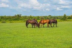 för hdrhästen för lantgårdar betar den gröna bilden Landsvårlandskap georgia Fotografering för Bildbyråer