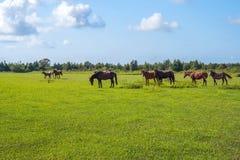 för hdrhästen för lantgårdar betar den gröna bilden Landsvårlandskap georgia Arkivbilder