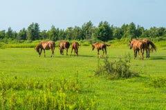 för hdrhästen för lantgårdar betar den gröna bilden Landsvårlandskap georgia Royaltyfria Foton