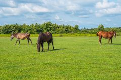 för hdrhästen för lantgårdar betar den gröna bilden Landsvårlandskap georgia Royaltyfri Foto