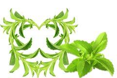 För hjärtaform för socker tillförordnad växt för Stevia på vit bakgrund Arkivfoton