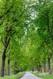 För hoträd för vandringsled rinnande gränd Fotografering för Bildbyråer