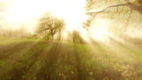 För hovår för solnedgång ljusa stråla träd