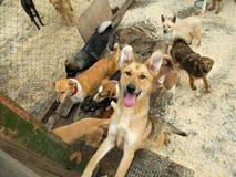 för hundar stray mycket Arkivbilder
