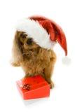 för hundgåva för ask gullig hatt santa Royaltyfri Fotografi