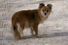 För hundgata för hund små djur, Royaltyfria Foton
