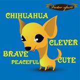 För illustrationdesign för information grafisk vektor av chihuahuahunden Arkivbilder