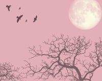 för illustrationliggande för afton 3d pink Fotografering för Bildbyråer