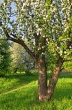 för illustrationtree för äpple härlig vektor Arkivbild