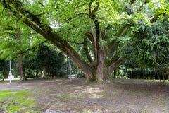 för illustrationupplösning för ginkgo 3d hög white för tree royaltyfri fotografi