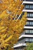för illustrationupplösning för ginkgo 3d hög white för tree Arkivbilder