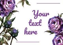 För inbjudankort för vattenfärg realistisk mall - purpurfärgad pion royaltyfri illustrationer