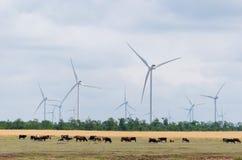 för ireland för stor blå lantgård för oklarhetskust östlig wind för white för väder trevlig sky Royaltyfri Fotografi