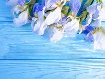 För irisinbjudan för härlig blomma ny hälsning för ram för bakgrund för garnering för beröm royaltyfri foto