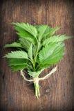 för irritera wild sticka urtica nässlaväxt för dioica Fotografering för Bildbyråer